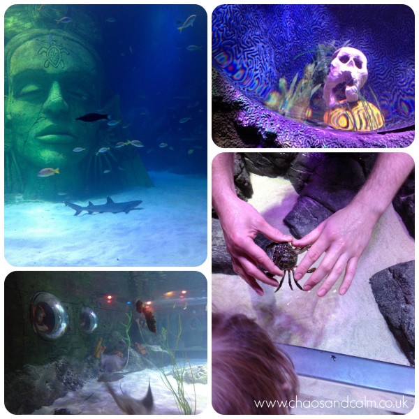 Sealife Centre Collage 2