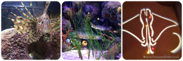 Sealife Centre Collage